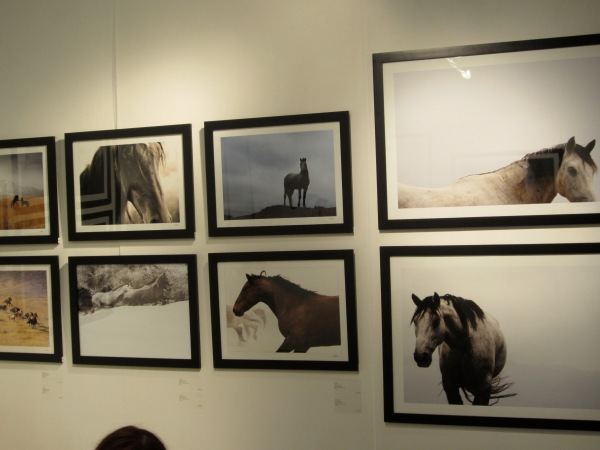 The photos are of free-roaming wild horses living in the mountains of Western Utah.